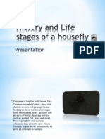 history and life cycle of a house fly