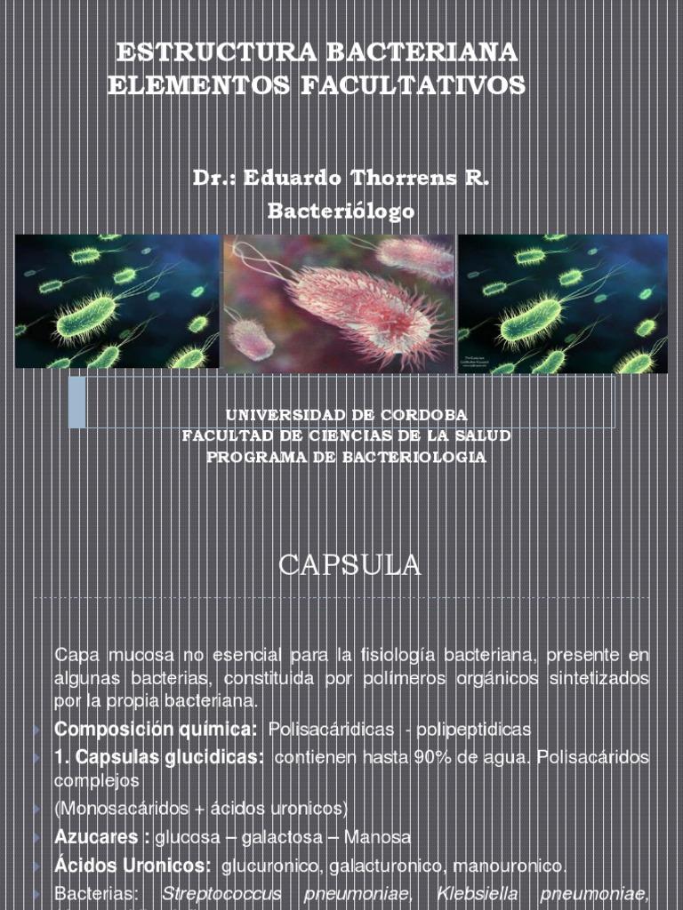 Estructura Bacteriana Elementos Facultativos 2 Pptx