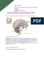 Acciones fisiológicas de la adrenalina