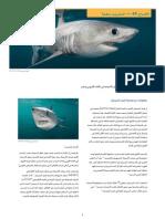 CITES FactSheet Porbeagle Arabic