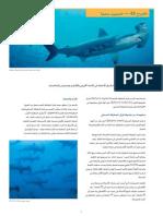 CITES FactSheet Scalloped Hammerhead Arabic