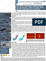 Agonistic Behavior of Dolphins Towards Sperm Whales