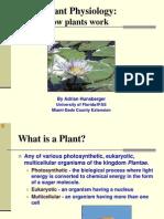 Fotosinesis Presentation