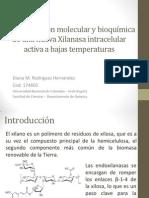 Caracterización molecular y bioquímica de una nueva Xilanasa