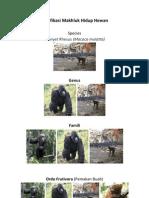 Klasifikasi monyet