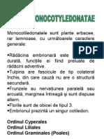 Monocotiledonate