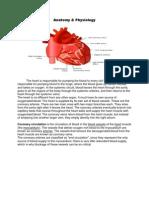 Anatomy Myocardial Infarction