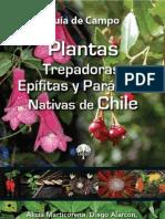 Catitas chilenas reproduccion asexual de las plantas