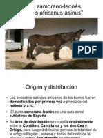 Asno Zamorano-Leonés.odp