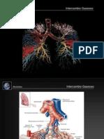ALH [11] Respiratorio [Fisiología].ppt