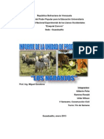 Informe UP Los Naranjos