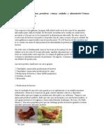 Manual de Las Gallinas Ponedoras