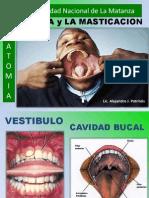 17bocaymasticacion-120909210001-phpapp01