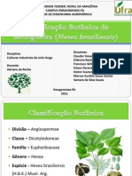 Classificação Botânica sa seringueira (Hevea brasiliensis)