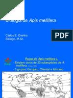 Biologia de Apis Mellifera2