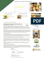 Dieta Vegetariana Contra La Fibromialgia UVE