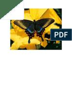 mariposas.doc