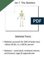 Human Skull (Adult & Fetus)