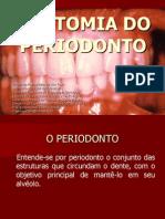 _anatomia Do Periodonto