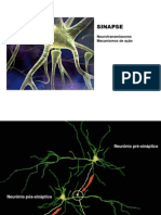3 Sinapse Nt Mecanismo