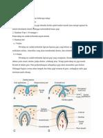 Embriologi Gigi