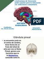 Endocrino Marisol Material de Estudio