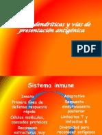 celulas dendriticas