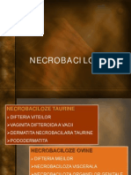 Necrobaciloze