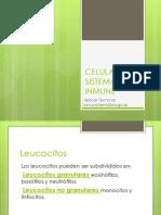 celulassistemainmune-100302210953-phpapp02