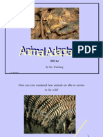 Animal-Adaptations Powerpoint