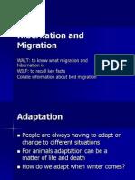 Hibernation & Migration