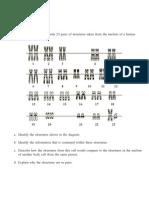 homologous chromosomes open response question