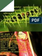 Plante Carnivore2