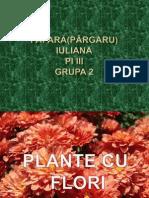 Plante Cu Flori