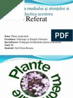 Plante Medicinale (2)