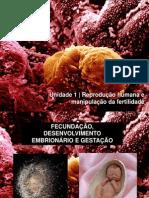 1.2. - Fecundação, desenvolvimento embrionário e gestação