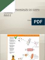 Níveis de Organização do Corpo Humano (Aula 2)