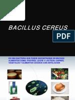 Bacillus Cereus