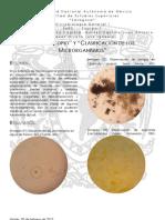 Microscopio y Clasificación de los Microorganismos, 2602, 05-02-13