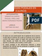 Patologias en Equinos