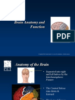brain anatomy and function powepoint ppt