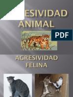 Agresividad en perros, condor, jabali, caballos.pdf