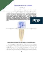 Apuntes de Anatomía de la Madera