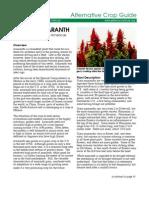 Amaranth Crop Guide