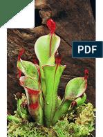 El Gran Libro de Plantas Carnivoras