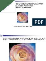 Anatomía  - Las celulas