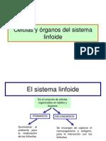 Rganos Del Sistema Linfoide 1220507950475681 8