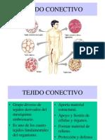 TEJIDO CONECTIVO (2)