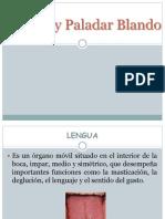 Expo Lengua