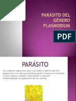 parásito del género Plasmodium